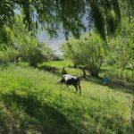 Манозири деҳаи Бунай