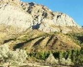 Kofarsulox