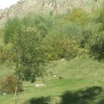 Bunay14